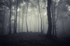 Dark haunted woods with fog Stock Images
