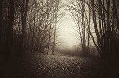 Dark haunted woods in late autumn. With clearing. Mysterious dark woods with spooky atmosphere. Moody dark autumn photo. Haunted forest with mist on Halloween royalty free stock photo