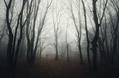 Dark haunted woods with man silhouette and fog Stock Photos