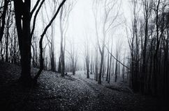 Dark haunted woods with path Royalty Free Stock Photo