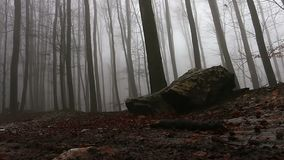Dark hazy autumn forest, low angle, Artistic footage. Stabilized stock footage
