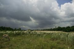 Dark and heavy clouds over a land of catkins royalty free stock photos