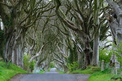 The Dark Hedges. 300 year old beach trees form an ominous frame for a country road near stranocum, ballymoney, northern ireland Stock Photography