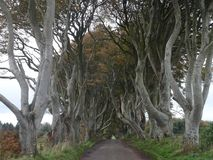 The Dark Hedges - Avenue of beech trees on the way to the Giants Causeway in the north of Ireland, Europe. The Dark Hedges - Wonderful Avenue of beech trees on Royalty Free Stock Image