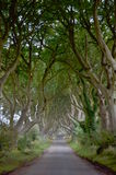 Dark Hedges at Ballymena. The dark hedges is a Romantic, atmospheric, tunnel-like avenue of intertwined beech treesin Ballymena County Antrim, Northern Ireland Royalty Free Stock Photos