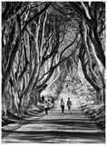 The Dark Hedges , Ballymoney, Northern Ireland royalty free stock photography