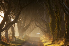 Dark Hedges. Beech trees alley near Antrim, Co. Antrim, Northern Ireland Royalty Free Stock Images