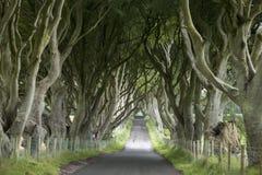 Dark Hedges, County Antrim stock images