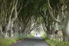 Dark Hedges, County Antrim royalty free stock photography