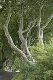 Dark Hedges, County Antrim. Northern Ireland royalty free stock images