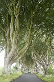 Dark Hedges, County Antrim Stock Photos
