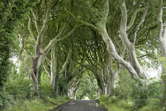 Dark Hedges, County Antrim Royalty Free Stock Photo