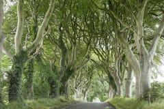 Dark Hedges, County Antrim. Northern Ireland royalty free stock image
