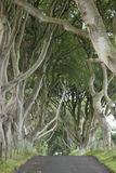Dark Hedges, County Antrim Stock Photography