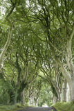 Dark Hedges, County Antrim Stock Image