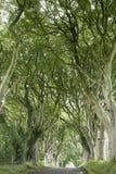 Dark Hedges, County Antrim. Northern Ireland stock image