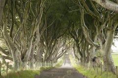Dark Hedges, County Antrim. Northern Ireland stock images
