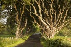 Dark Hedges, County Antrim. Northern Ireland royalty free stock photos