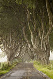 Dark Hedges, County Antrim Stock Photo