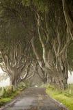 Dark Hedges, County Antrim. Northern Ireland stock photo