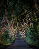 Dark hedges Royalty Free Stock Photos