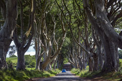 The Dark Hedges - County Antrim - Northern Ireland Royalty Free Stock Photos