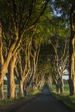 The Dark Hedges - County Antrim - Northern Ireland Stock Photography
