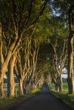 The Dark Hedges - County Antrim - Northern Ireland stock photography