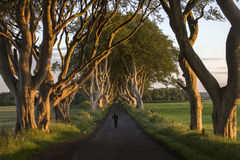 The Dark Hedges - County Antrim - Northern Ireland Royalty Free Stock Photo