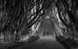 The Dark Hedges Stock Photos