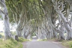 Dark Hedges, County Antrim, Northern Ireland. UK stock images
