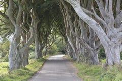 Dark Hedges, County Antrim, Northern Ireland. UK royalty free stock images