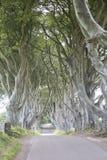 Dark Hedges, County Antrim, Northern Ireland royalty free stock image