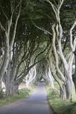 Dark Hedges, County Antrim, Northern Ireland Stock Photography