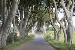 Dark Hedges, County Antrim, Northern Ireland stock images