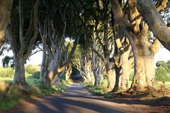 Dark Hedges. stock photo
