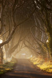 Dark Hedges II. Moody sunrise in Antrim, Northern Ireland Stock Photo