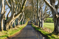 The Dark Hedges in Ireland Stock Images