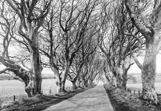 The Dark Hedges, King's Road in Game of Thrones Royalty Free Stock Photo