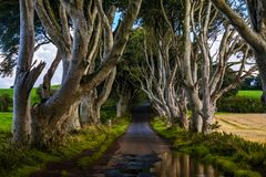 The Dark Hedges, Northern Ireland. The Dark Hedges, Located between Armoy and Stranocum in County Antrim, Northern Ireland. It is an avenue of beech trees along royalty free stock photos