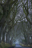 The Dark hedges Royalty Free Stock Photo