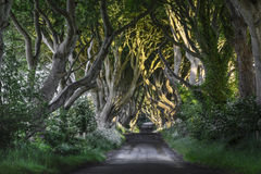 The Dark Hedges, N. Ireland stock photos