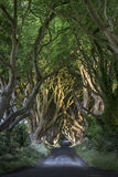 The Dark Hedges, North Irland. The Dark Hedges Co. Antrim, Bregagh Road, Northern Ireland Royalty Free Stock Photos