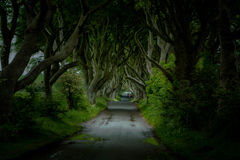 The Dark Hedges, Northern Ireland. The Dark Hedges are an atmospheric tunnel of beech trees in Northern Ireland stock photo