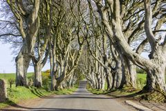 The Dark Hedges, Northern Ireland. The Dark Hedges, an avenue of beech trees in Ballymoney, County Antrim, Northern Ireland, featured as a popular filming royalty free stock photo