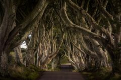 The Dark Hedges, Northern Ireland. The Dark Hedges, Located between Armoy and Stranocum in County Antrim, Northern Ireland. It is an avenue of beech trees along royalty free stock image