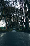 The Dark Hedges in Northern Ireland Stock Photo
