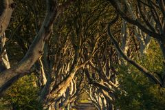 The Dark Hedges, Northern Ireland. The Dark Hedges, Located between Armoy and Stranocum in County Antrim, Northern Ireland. It is an avenue of beech trees along royalty free stock photo