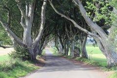 Dark hedges Northern Ireland stock photography
