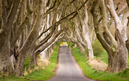 The Dark Hedges, Northern Ireland. A road through dense vegetation Stock Photo